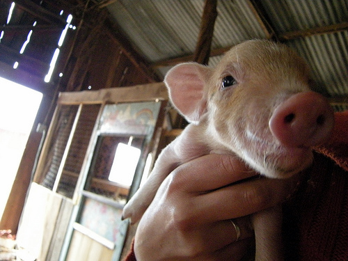 """I'm far to cute to have swine flu"""