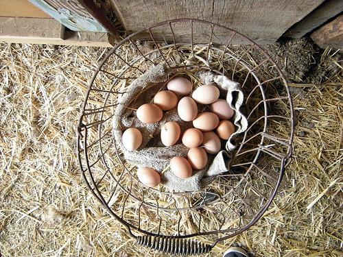 Delicious Eggs